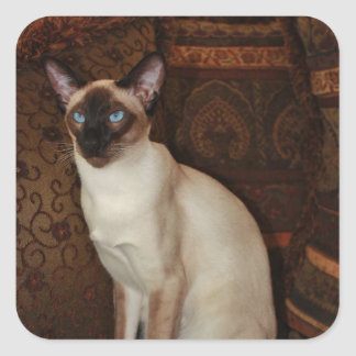 Elegant Siamese Cat Square Sticker