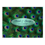 elegant turquoise peacock save the date postcard