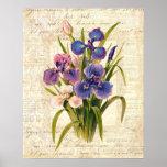 Elegant Vintage French Pink and Purple Irises Poster