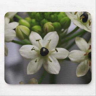 Elegant White Blossoms Mouse Pad