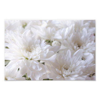 Elegant White flowers Photo Print