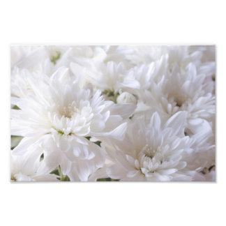 Elegant White flowers Photograph