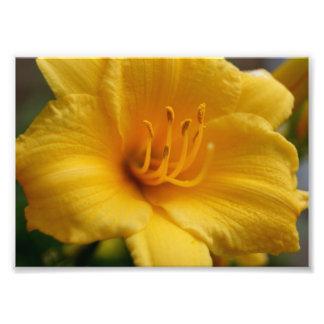 Elegent Yellow 5x7 Photographic Print