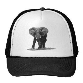 ELEPHANT 1B HAT