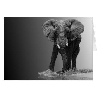 ELEPHANT 2A CARDS