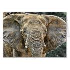 Elephant African All Ears Card