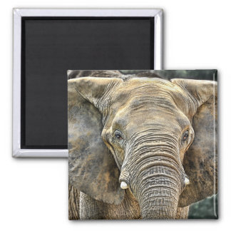 Elephant African Face On Magnet