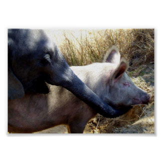 Elephant and Pig in Africa Poster