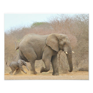 Elephant - Animal Babies Beautiful Photographic Print