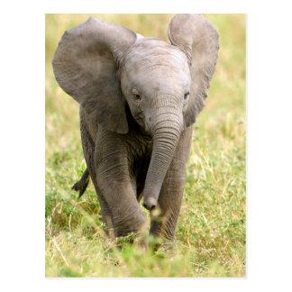 Elephant baby postcard