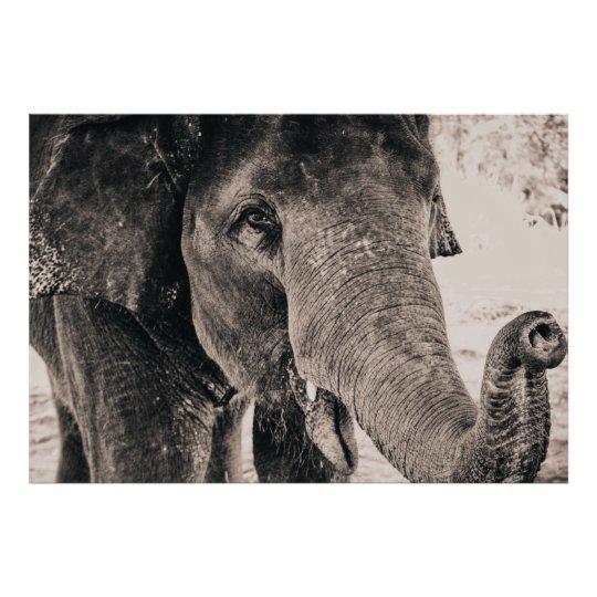 Elephant Black and White Africa Animals Poster
