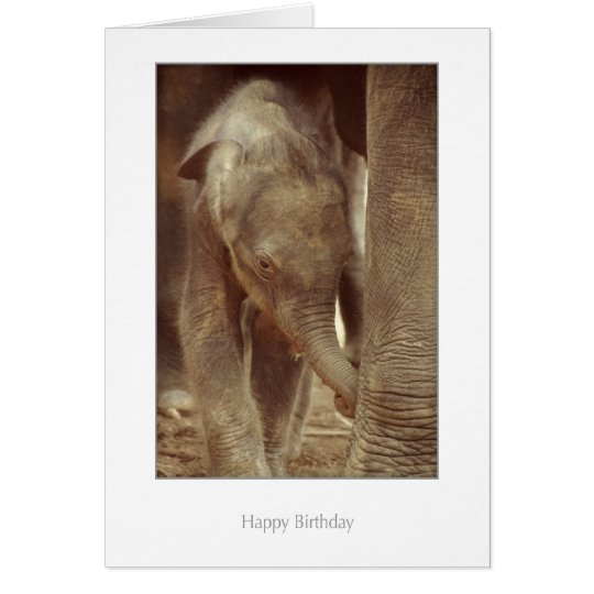 Elephant Calf Birthday Card