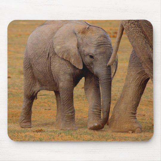 elephant calf mouse mat