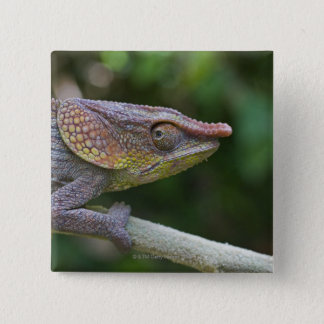 Elephant chameleon, Madagascar 15 Cm Square Badge
