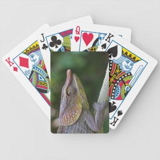 Elephant chameleon, Madagascar Bicycle Playing Cards