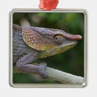 Elephant chameleon, Madagascar Christmas Ornament