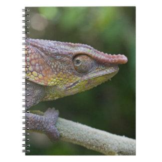 Elephant chameleon, Madagascar Spiral Notebook