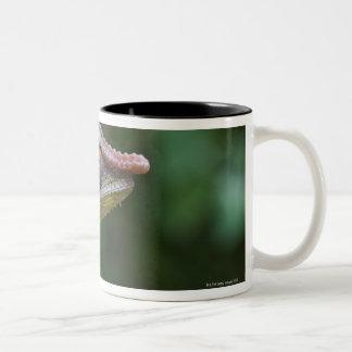 Elephant chameleon, Madagascar Two-Tone Coffee Mug