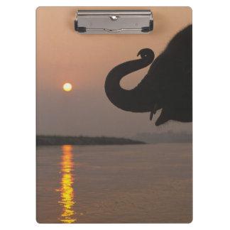 Elephant, Chitwan National Park, Nepal Clipboard