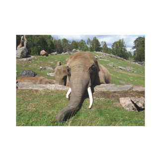 Elephant Close-Up Canvas Print