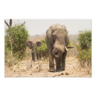 Elephant dusting himself down photo print