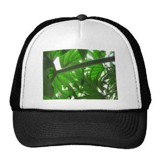 Elephant-Ear-Philodendron 5 Cap