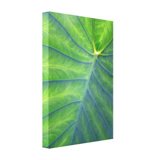 Elephant Ears With a Touch of Blue Gallery Wrapped Canvas