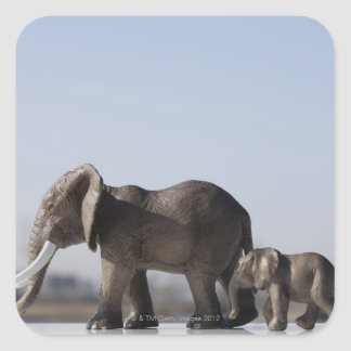 Elephant Family background blue sky Square Sticker