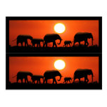 Elephant Family Book Markers Postcard