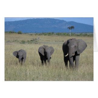 Elephant Family Cards