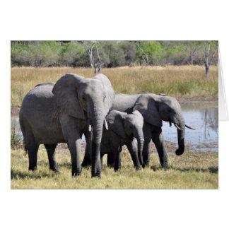 Elephant family card