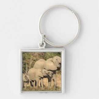 Elephant Family Drinking Key Ring