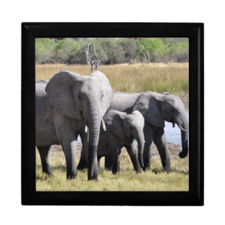 Elephant family gift box
