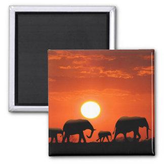 Elephant family magnet
