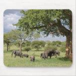 Elephant family mouse mat