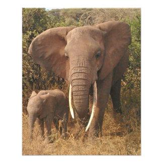 """Elephant 4.5"""" X 5.6"""" Flyer"""