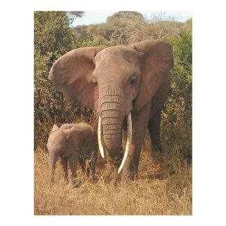 """Elephant 8.5"""" X 11"""" Flyer"""