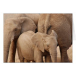 Elephant Greeting Card - Blank