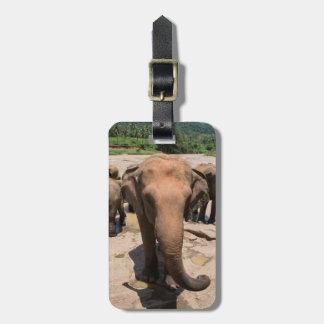Elephant group portrait, Sri lanka Luggage Tag
