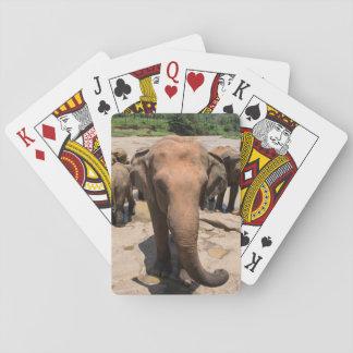 Elephant group portrait, Sri lanka Playing Cards