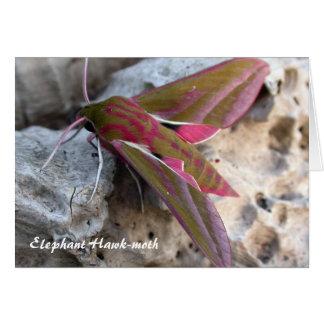 Elephant Hawk-moth Greetings Card