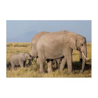 Elephant Herd with Young Acrylic Wall Art