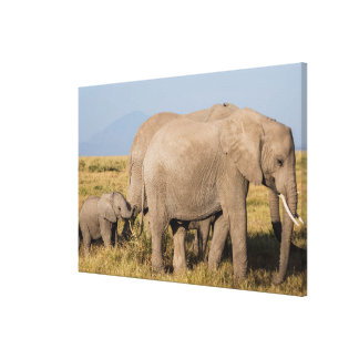 Elephant Herd with Young Canvas Print