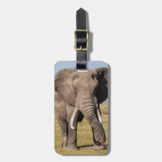Elephant in an Aggressive Pose Luggage Tag