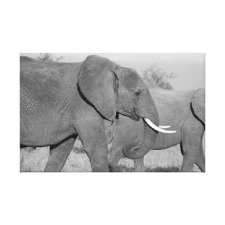 Elephant in black and white canvas prints