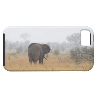 Elephant in early morning fog, Kruger National Tough iPhone 5 Case