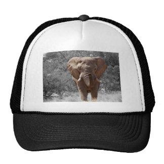 Elephant in Namibia Trucker Hats