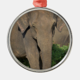 Elephant in Sri Lanka Christmas Ornament