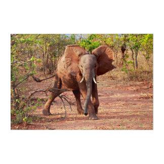 Elephant in Warning Pose Acrylic Print