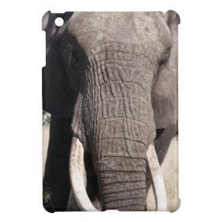 Elephant (Loxodonta africana), Abu Camp 3 Case For The iPad Mini